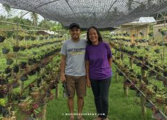 Organic farming finds a home in Marinduque